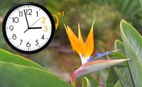clocking turning one hour forward illustrating Daylight Saving Time